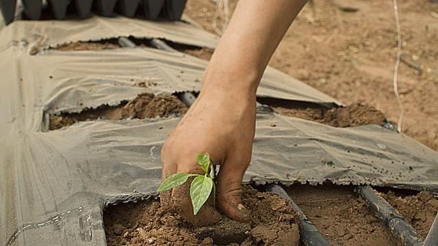 Za bolju budućnost: 3,2 miliona dinara za mlade poljoprivrednike