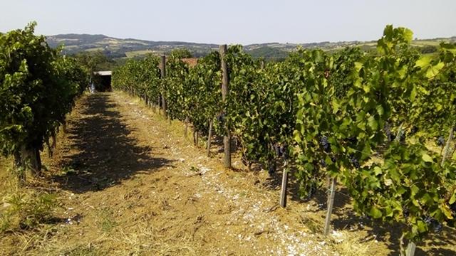 Ovaj kraj nekada se hvalio malinom i šljivom, a danas je to grožđe