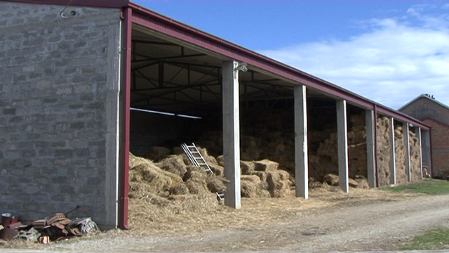 Koliko je štetna buđ u hrani za stoku i kako je sprečiti?