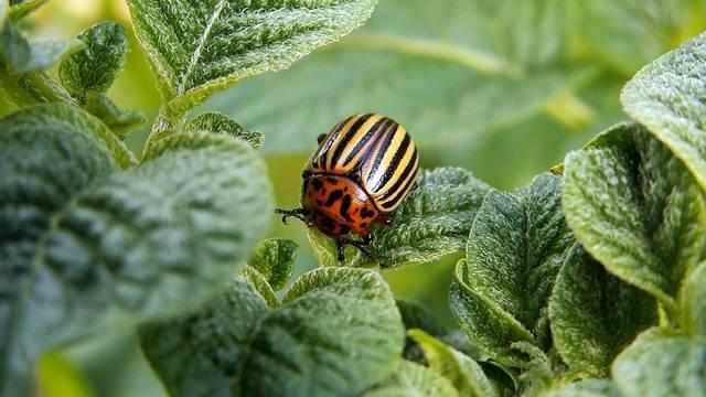 I od ovih biljaka možete da napravite prirodne preparate za zaštitu bilja
