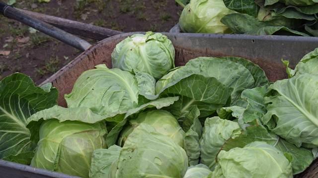 Mali poljoprivredni proizvođači ne odlučuju o ceni