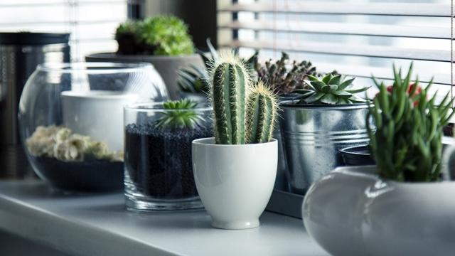 4 znaka da vaše sobne biljke venu i kako da to sprečite