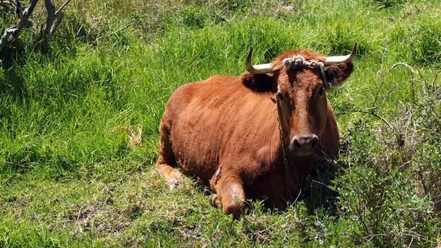 Ovi simptomi su siguran znak da je vaša krava bolesna