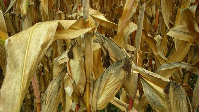 Kako sprečiti posledice loših vremenskih uslova u poljoprivredi