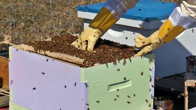 Spajanje slabih pčelinjih društava pomaže pčelama da prežive zimu