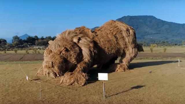 Evo kako se u Japanu obeležava uspešno završena žetva pirinča