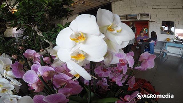 Jesenje boje i miris cveća obeležili ovogodišnji 8. Festival cveća