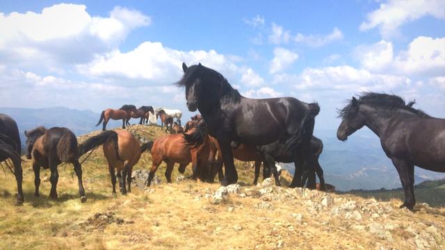 Koliko konjskih snaga vidite? [AGROFOTO]