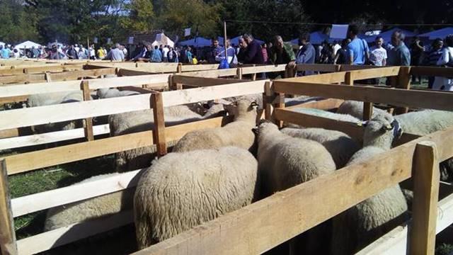 Rad u fabrici zamenio gajenjem ovaca