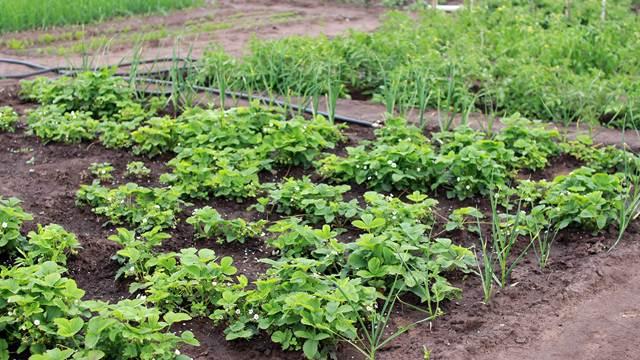 Agroekonomija: Koje prednosti donosi raznovrsna poljoprivredna proizvodnja