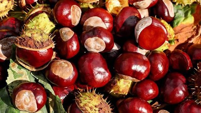 Pitomi kesten: Jedno drvo donosi obilje omiljene jesenje poslastice - © Pixabay