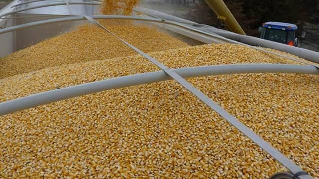 Direkcija za robne rezerve kupuje merkantilni kukuruz