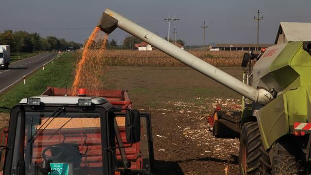 Savremeni hibridi kukuruza postigli dobre prinose