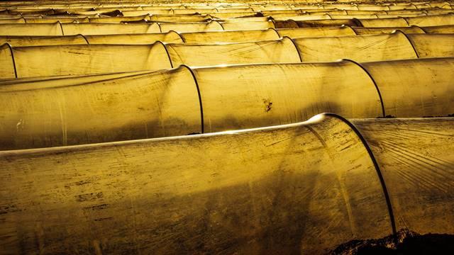 Gajenje povrća u niskim tunelima - Biljke su zaštićene i razvijaju se brže