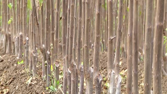 Saveti: Odaberite dobro mesto i kvalitetne sadnice za podizanje voćnjaka