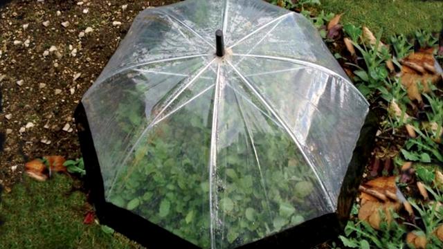 Iskoristite stari kišobran i zaštitite vaše biljke od hladnoće