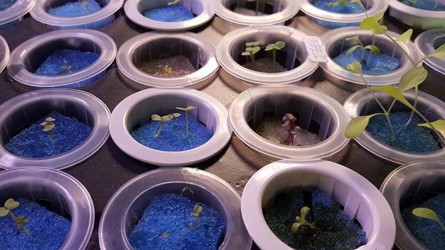 Hidroponika: Da li povrće može da bude organsko ako se ne gaji u zemlji?
