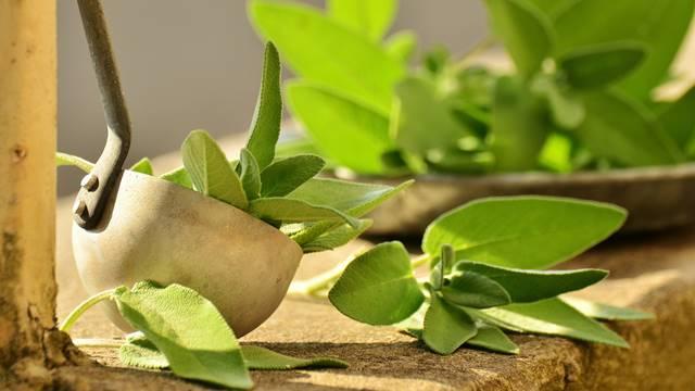 Lek za razne bolesti: Recepti za čaj, tinkturu i sapun od žalfije