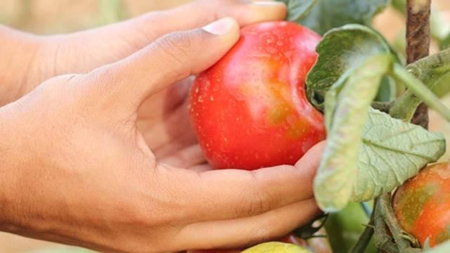 Veća ulaganja u kontrolu i bezbednost hrane
