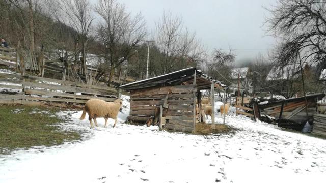 Zimske čarolije na selu [AGROFOTO]