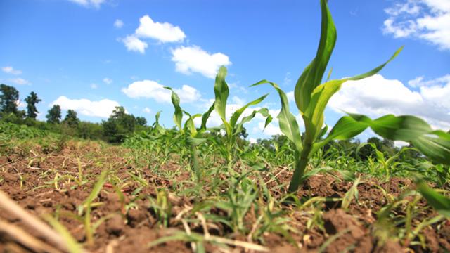 U zakup 7.317 hektara poljoprivrednog zemljišta
