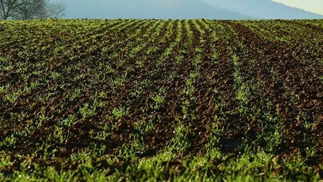 Opština Aranđelovac ulaže u razvoj poljoprivrede
