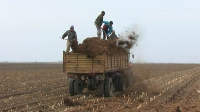 Goveđi stajnjak – pogodan za svaku biljnu proizvodnju