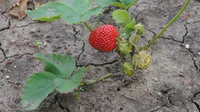 Uslovi za zaštitu bilja u okviru IPARD programa