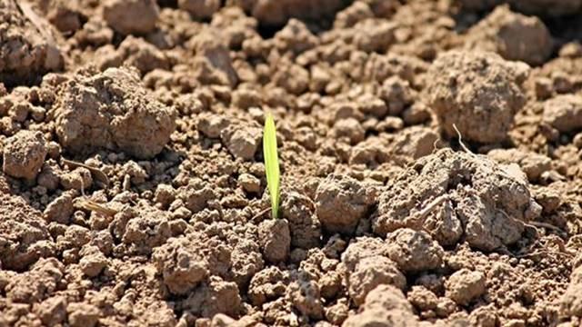 Klimatske promene sve više utiču na poljoprivrednu proizvodnju