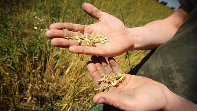 Koje su prepreke mladih poljoprivrednika za dobijanje kredita