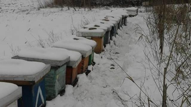 Iz ličnog iskustva: Radovi u pčelinjaku za mesec februar