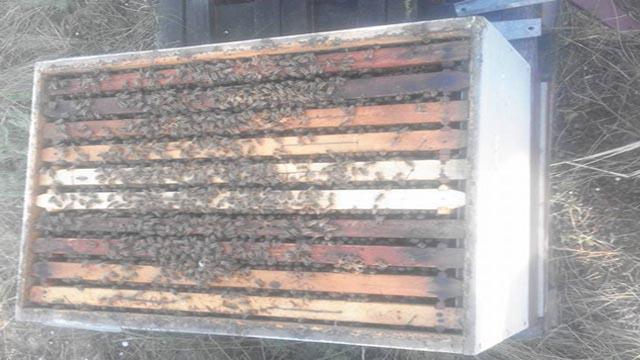 Iz ličnog iskustva: Kako započeti sa pčelarstvom