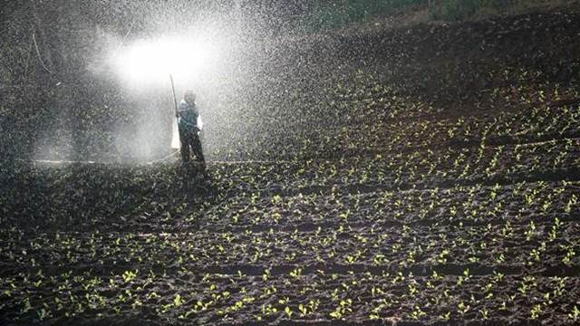 Ostaci herbicida u zemljištu smanjuju prinos