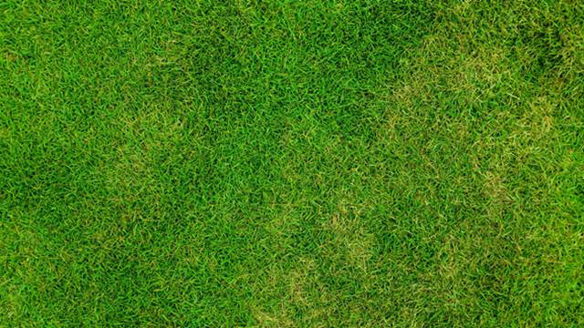 Saveti stručnjaka: Dosejavanje, prihrana i nega travnjaka