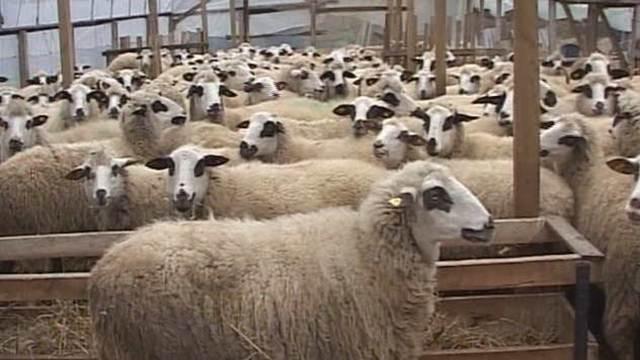 Subvencije održavaju stočarsku proizvodnju