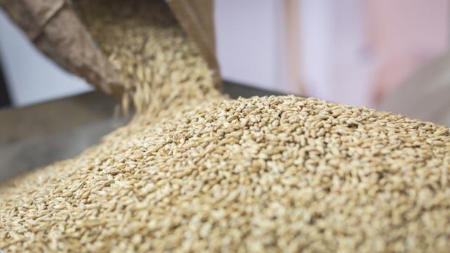 Zanatsko pivo – spoj kvalitetnih sastojaka i čiste ljubavi