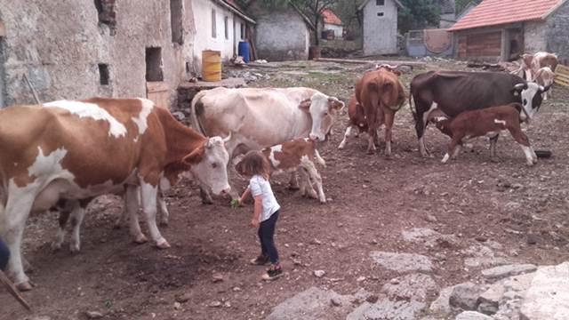 Uz pomoć poljoprivrede prehranjuje i školuje četvoro dece