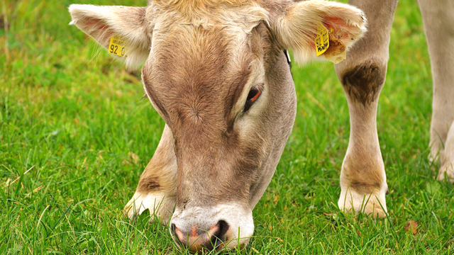 Šta je poljoprivredna proizvodnja visoke prirodne vrednosti
