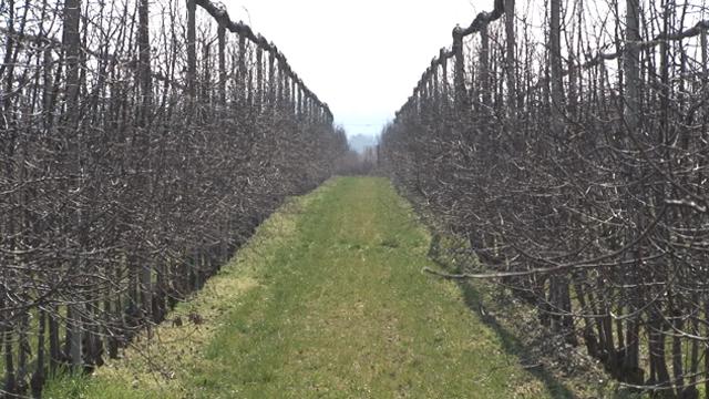 Prvi prolećni radovi u voćnjaku - zaštita ključna za stabilan prinos