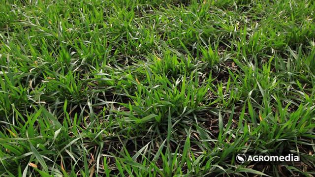 Ovo je nova MODERNA fabrika sredstava za prihranu bilja - ©Agromedia