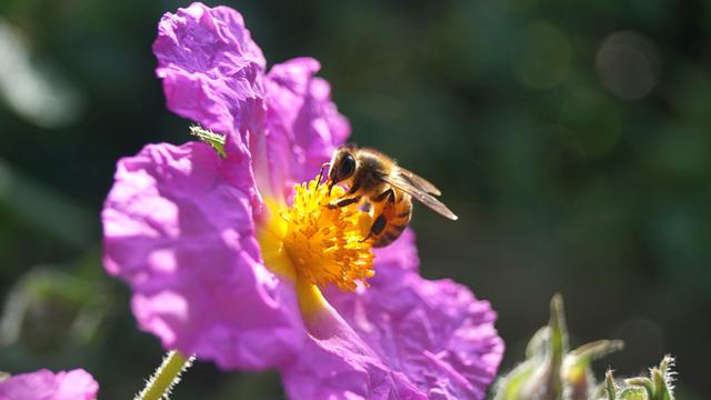 Kalendar cvetanja medonosnih biljaka i drveća