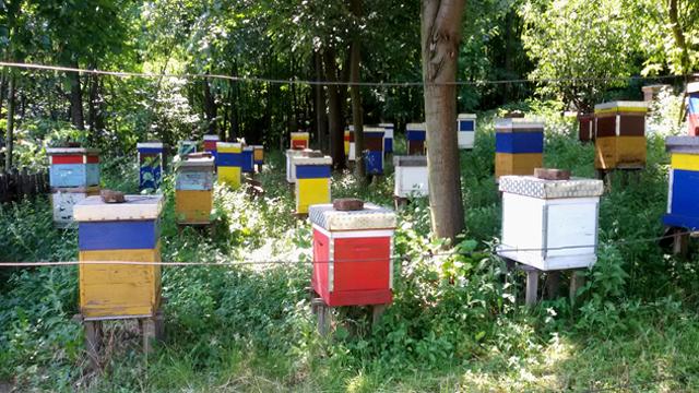 Šta sprečava razvoj organskog pčelarstva