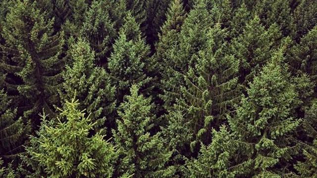 Reciklažom jedne tone stare hartije sačuva se 17 stabala