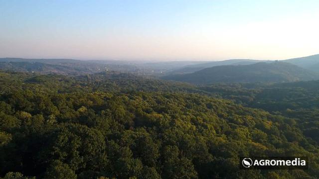 Iza 7 gora, iza 7 šuma [AGROFOTO]