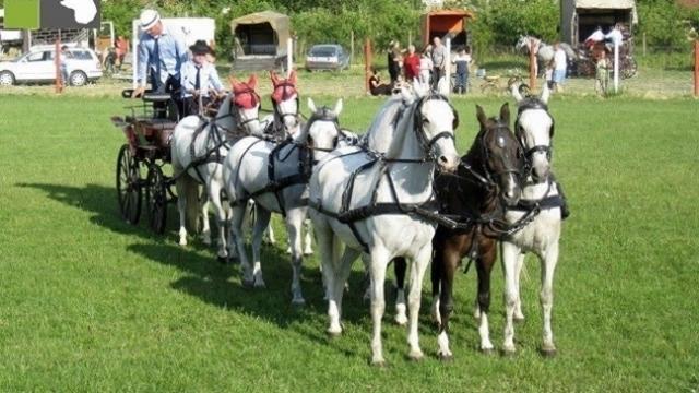 Manifestacija za sve ljubitelje konja - Crepajski fijaker
