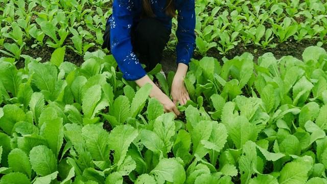 Plodored u povrtarstvu najznačajnija mera u zaštiti bilja