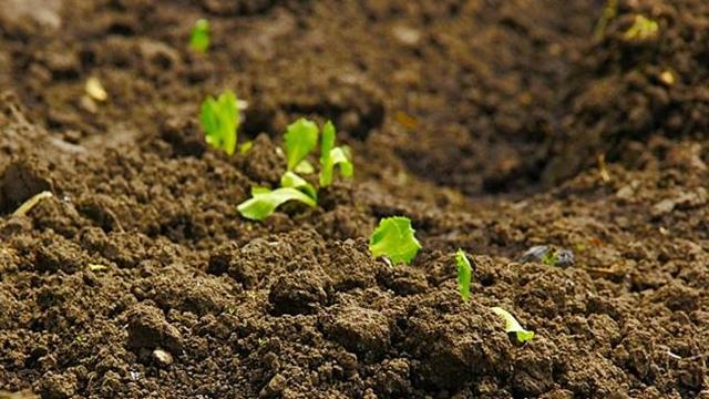 Usled manjka azota u zemljištu smanjuju se prinosi