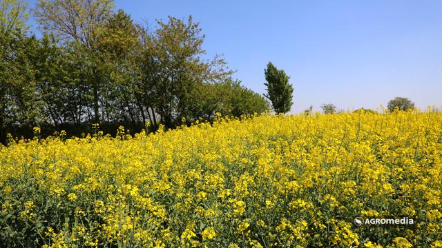 Za rodna polja [AGROFOTO]