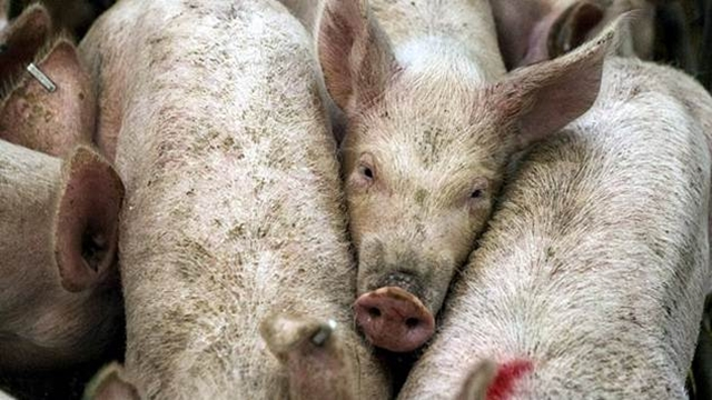 Zabrana uvoza i tranzita hrane životinjskog porekla iz Mađarske