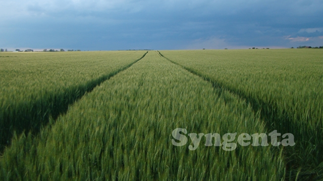Suzbijte biljne bolesti u strnim žitima fungicidima kompanije Syngenta